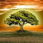 Еще 5 слов о Силе Рода и работе с предками…